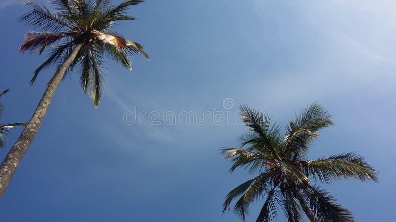 Mooie hemel van avond en zijn mooie kokospalmen royalty-vrije stock fotografie