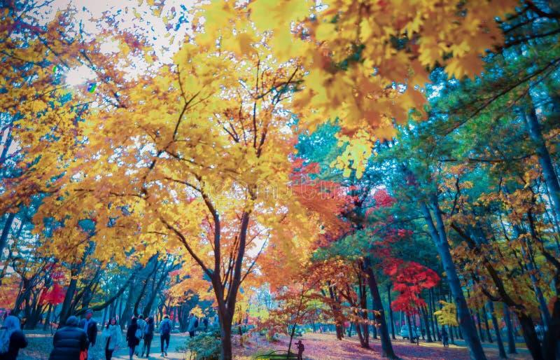 Mooie herfst in Korea stock foto