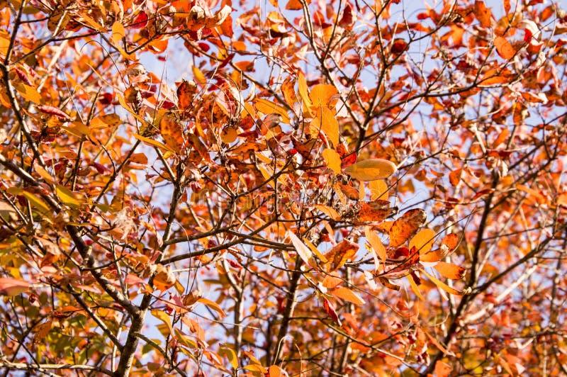 Mooie herfst rode bladeren op de achtergrond van de hemel stock foto's