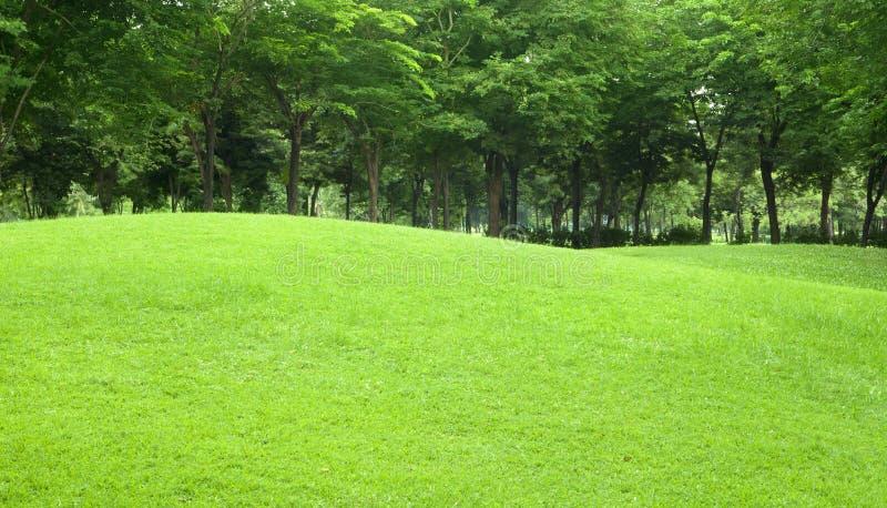 Mooie het hellen binnenplaats met binnen gras en boom stock foto
