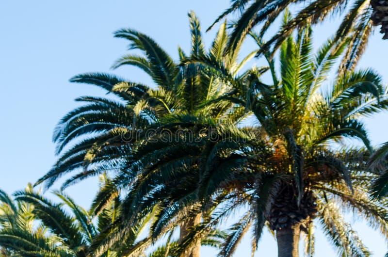 Mooie het uitspreiden palm, uitheemse gewassensymbool van vakantie, royalty-vrije stock foto