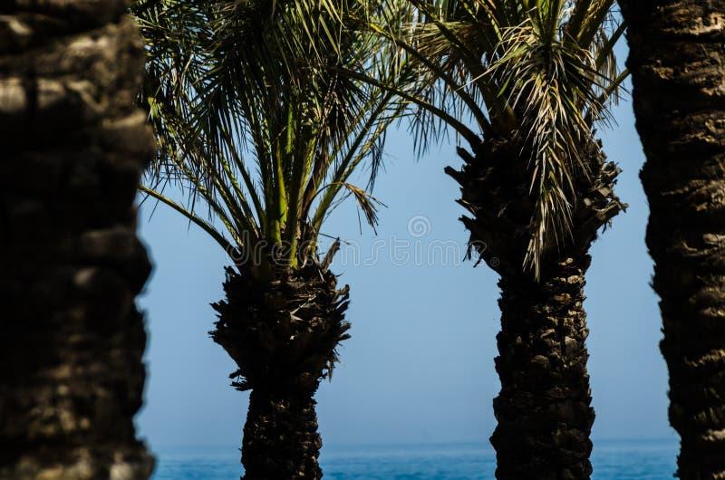 Mooie het uitspreiden palm, uitheemse gewassensymbool van vakantie, stock foto's