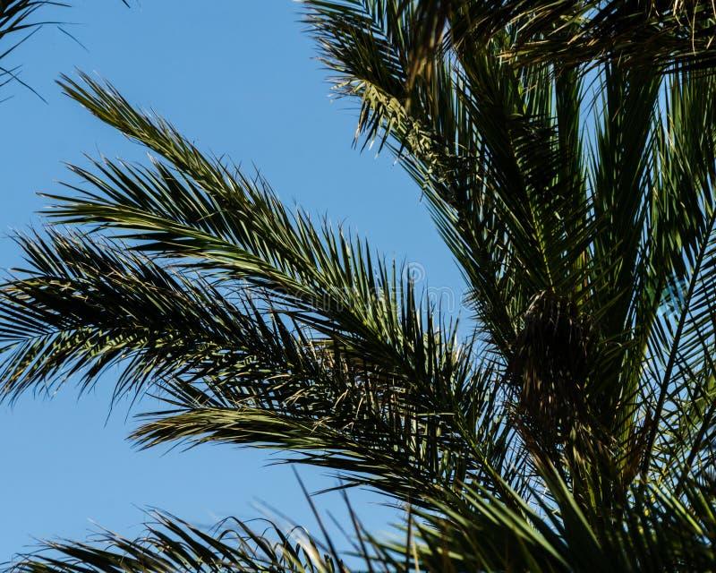 Mooie het uitspreiden palm, uitheemse gewassensymbool van vakantie, royalty-vrije stock fotografie