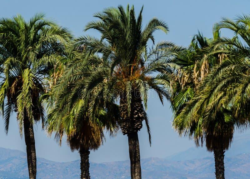 Mooie het uitspreiden palm, uitheemse gewassensymbool van vakantie, stock fotografie