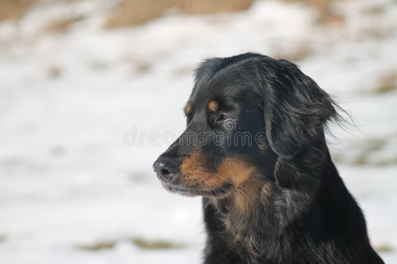 Mooie hond royalty-vrije stock afbeelding