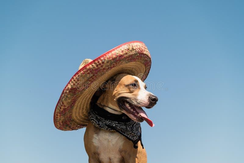 Mooie hond in Mexicaanse hoed als westelijke stijlbandiet van gangst royalty-vrije stock afbeeldingen