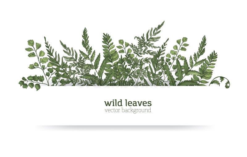Mooie horizontale die achtergrond of banner met schitterende varens, wilde kruiden of groene kruidachtige installaties wordt verf vector illustratie