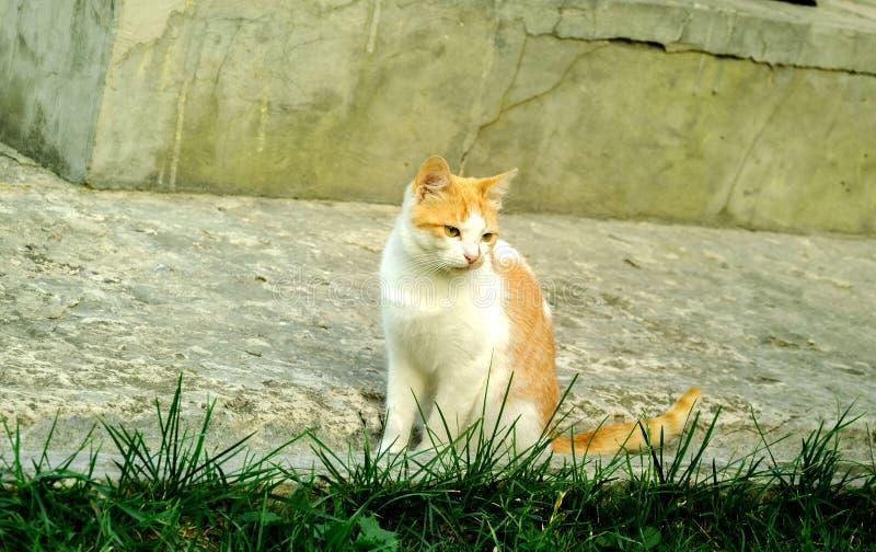 Mooie huisdierenkat stock foto