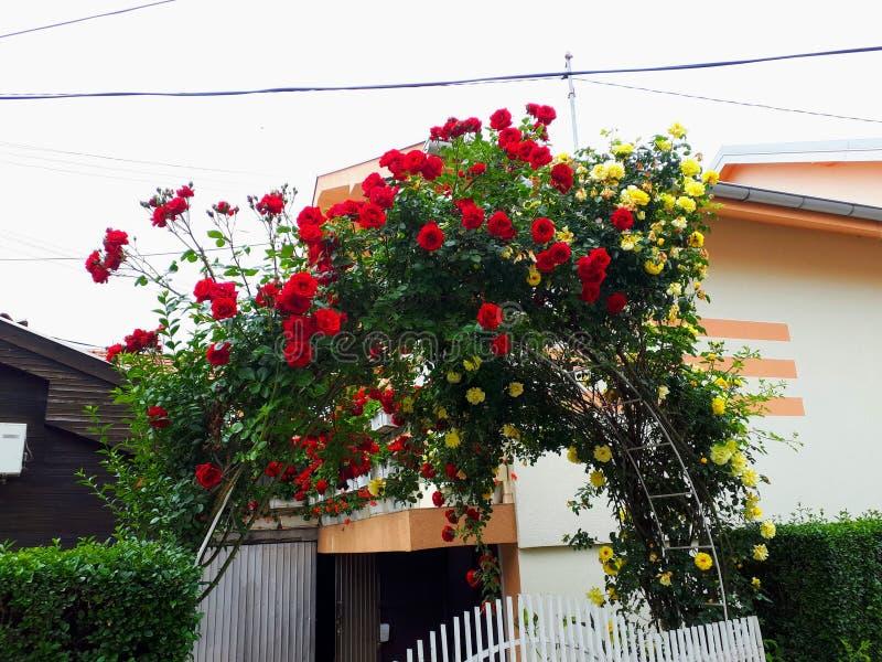 Mooie huispoort die met rozen wordt verfraaid royalty-vrije stock afbeeldingen
