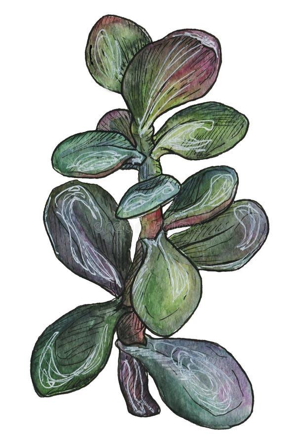 mooie iris in waterverf stock afbeeldingen