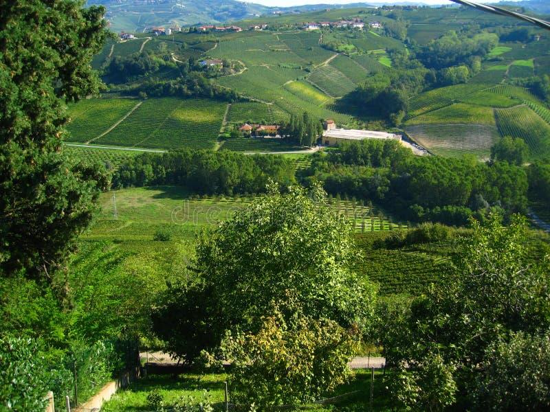Mooie Italiaanse wijngaarden royalty-vrije stock foto's