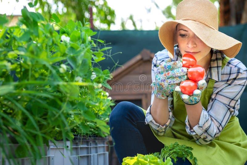 Mooie jonge kleine bedrijfslandbouwer die vers geoogste tomaten in haar tuin ruiken Inlands bioopbrengsconcept royalty-vrije stock fotografie