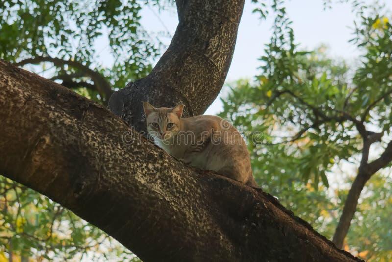 Mooie, jonge, verdwaalde, dakloze bruin, tan en een witte kat omhoog in een Thaise parkboom royalty-vrije stock afbeelding