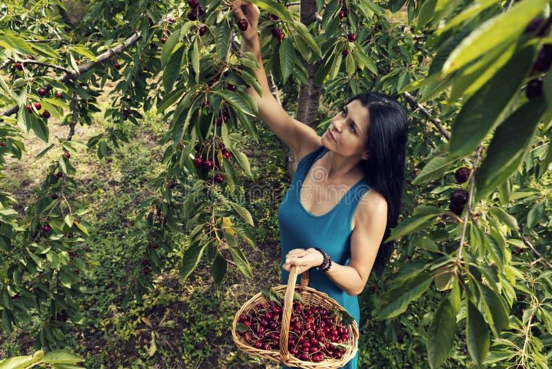 Mooie jonge vrouw die blauwe kleding dragen en kersen van de boom plukken stock foto's