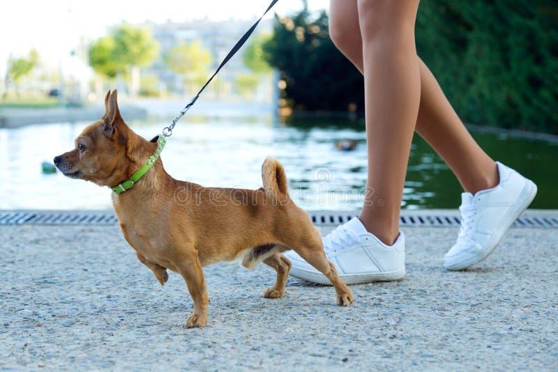 Mooie jonge vrouw die met haar hond in het park lopen royalty-vrije stock afbeelding