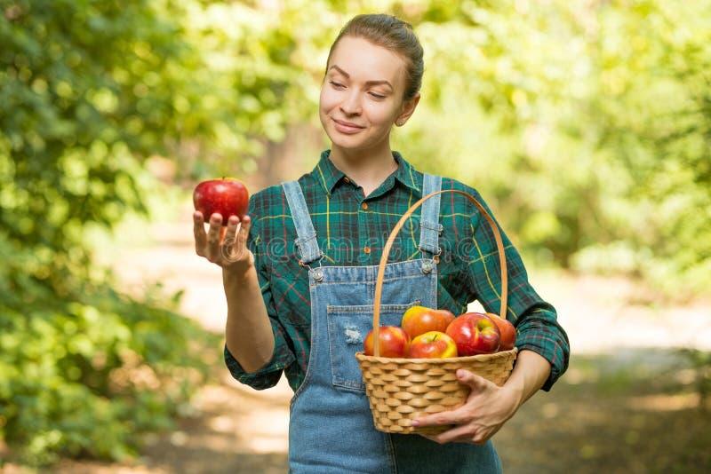 Mooie jonge vrouw die rijpe organische appelen in een mand in de tuin of op een landbouwbedrijf in een de herfst of de zomerdag p stock foto's