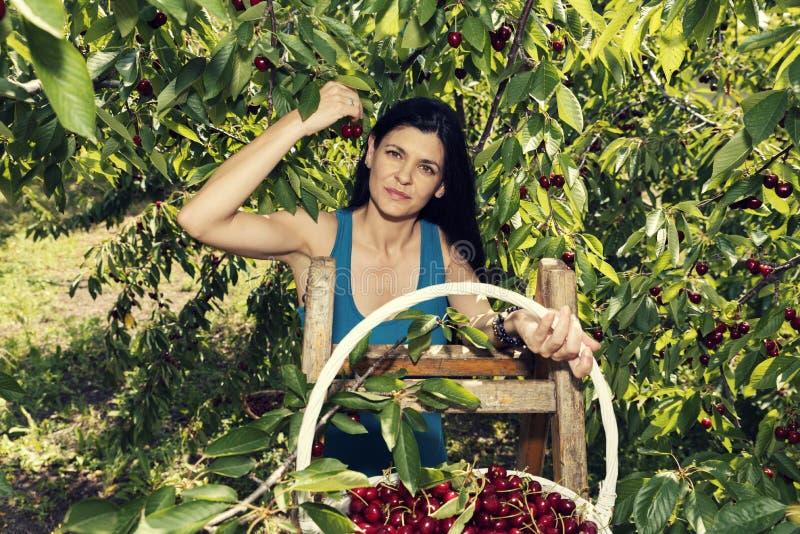 Mooie jonge vrouw die volledige witte rieten mand met kersen en status op een ladder en het glimlachen houden stock afbeelding