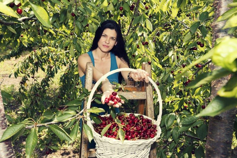 Mooie jonge vrouw die witte rieten mand houden en zich op ladder het plukken kersen bevinden stock foto's