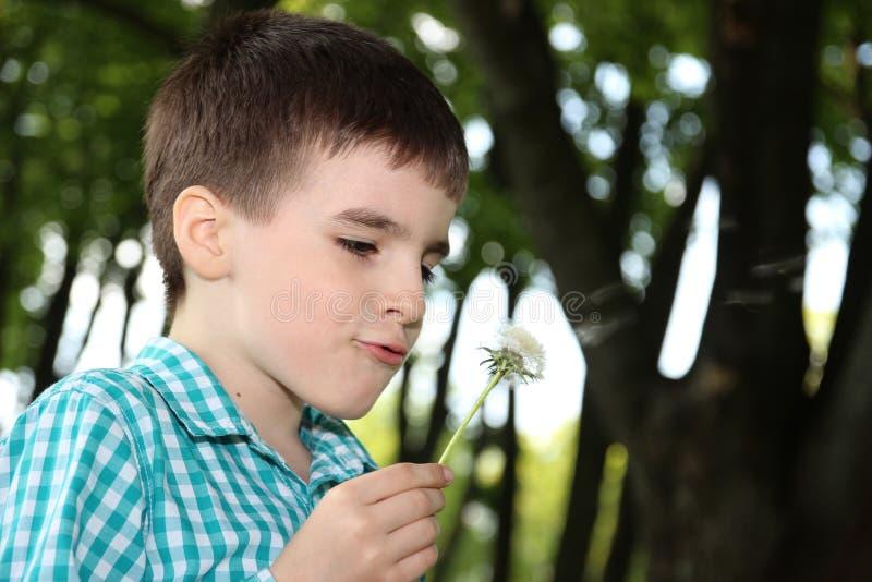 Mooie jongen met paardebloem royalty-vrije stock foto