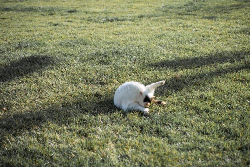 Mooie kat als huisdier in mening royalty-vrije stock foto's