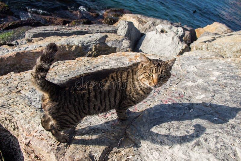 Mooie kat als huisdier in mening stock afbeeldingen