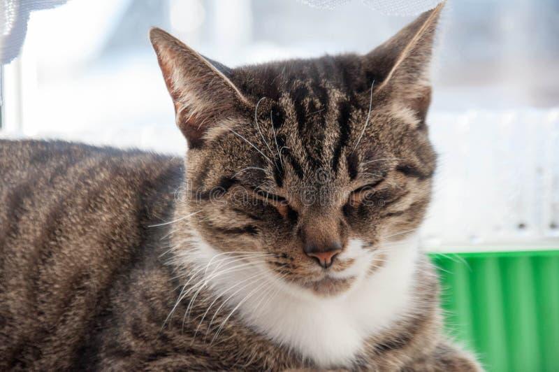 Mooie kat baldeet op het venster royalty-vrije stock afbeelding
