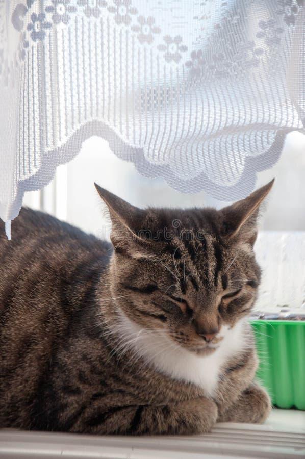 1 mooie kat baldeet op het venster stock afbeelding