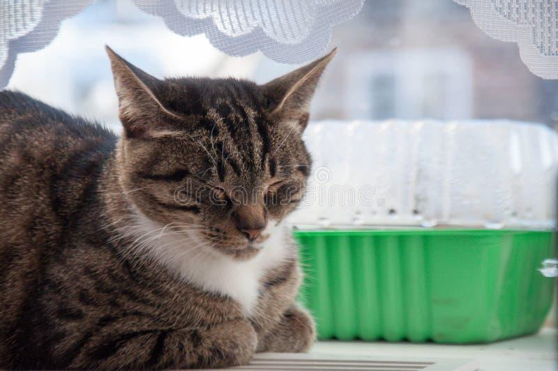 1 mooie kat baldeet op het venster royalty-vrije stock foto