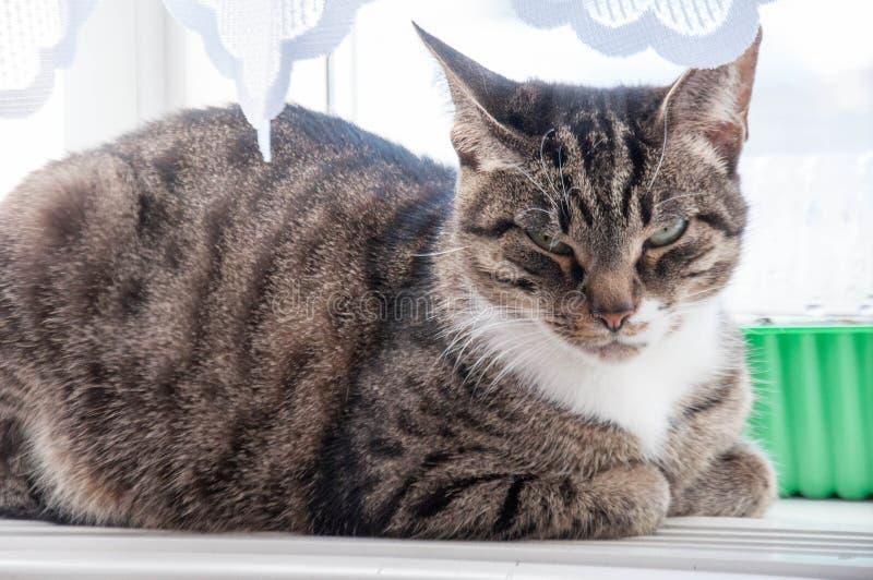 1 mooie kat baldeet op het venster stock foto's