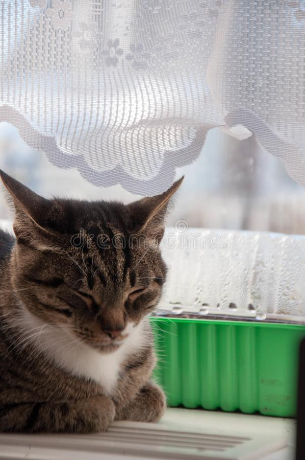 1 mooie kat baldeet op het venster stock afbeeldingen