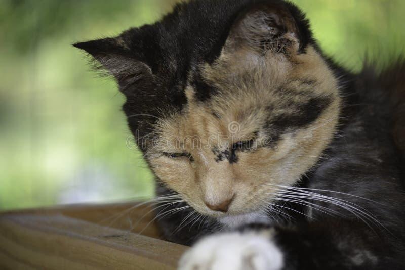 Mooie kat die slaperig en slapend worden royalty-vrije stock afbeelding