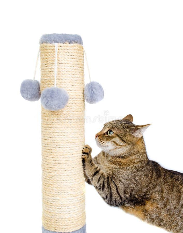 Mooie kat die zijn klauwen scherpen stock foto's