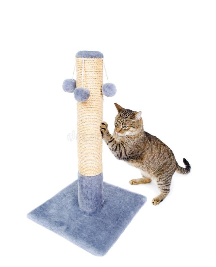 Mooie kat die zijn klauwen scherpen stock fotografie