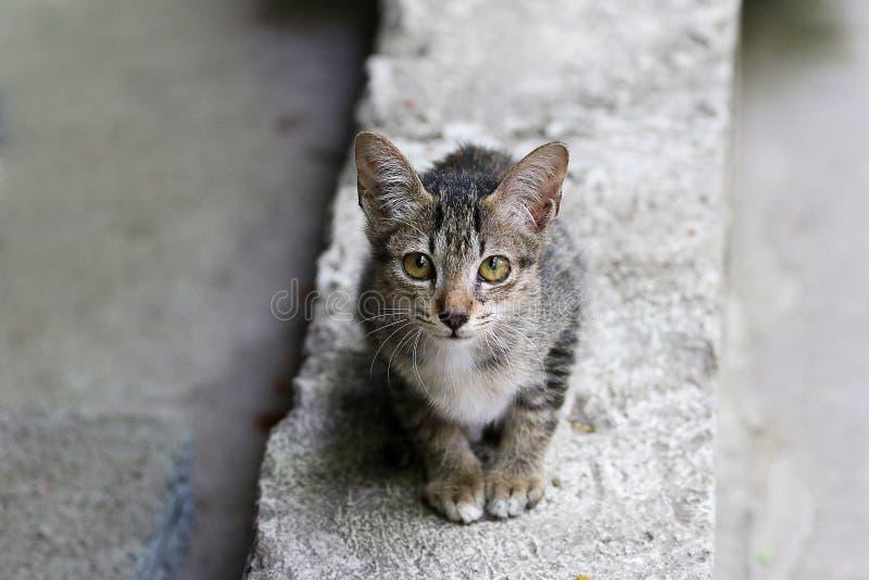 Mooie kat, het mooie wild, pot, dier, leuk huisdier, kat, mooie kat royalty-vrije stock afbeeldingen