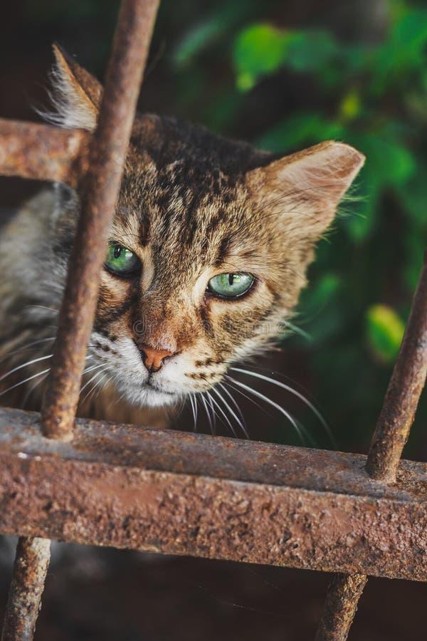Mooie kat met groene ogen portret stock afbeeldingen