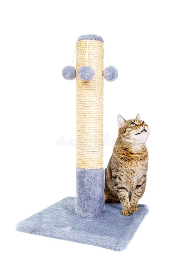 Mooie kat met het krassen van post royalty-vrije stock afbeelding