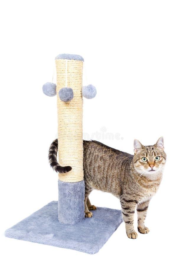 Mooie kat met het krassen van post stock fotografie