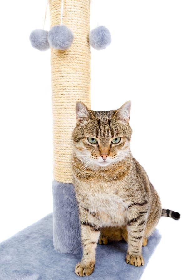 Mooie kat met het krassen van post stock foto