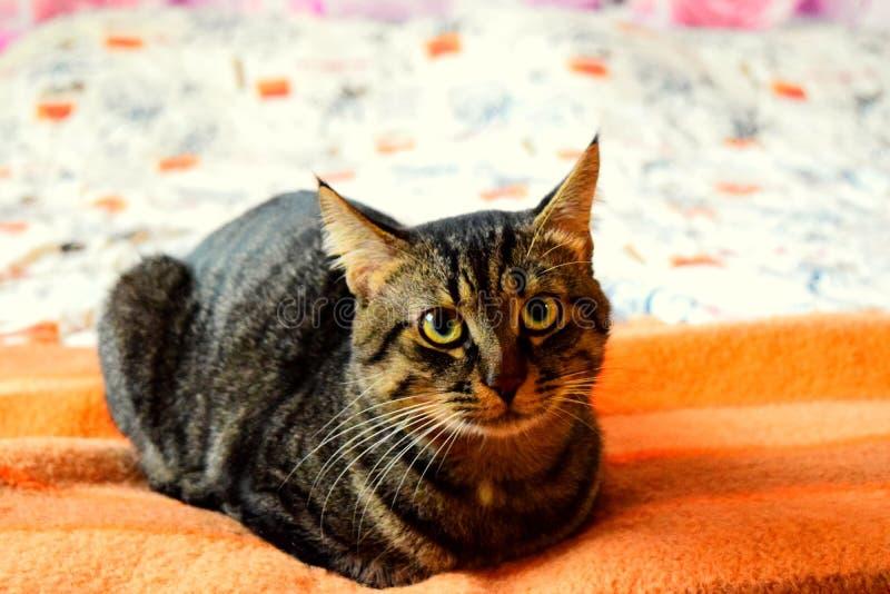 Mooie kattenogen stock fotografie