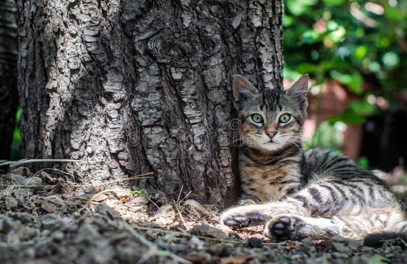 Mooie kattenzitting dichtbij een boomboomstam stock afbeeldingen
