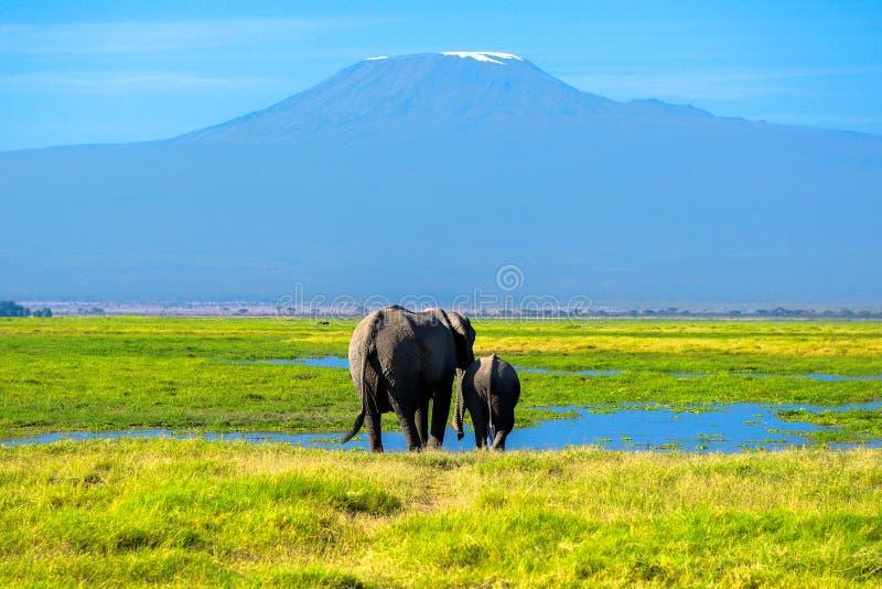 Mooie Kilimanjaro-berg en olifanten, Kenia royalty-vrije stock foto