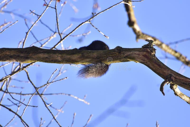 Mooie kleine eekhoorn die zaden zoeken stock afbeelding
