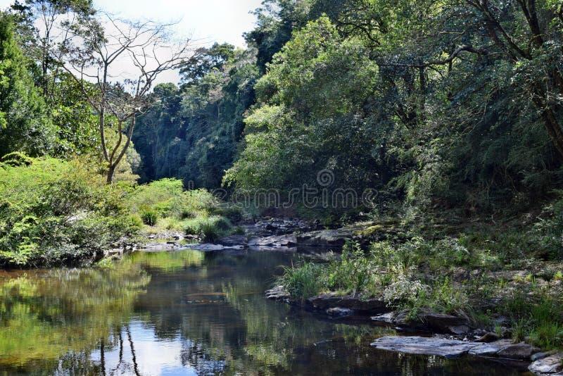 Mooie kleine rivier in Gardners-Dalingen Maleny stock afbeelding