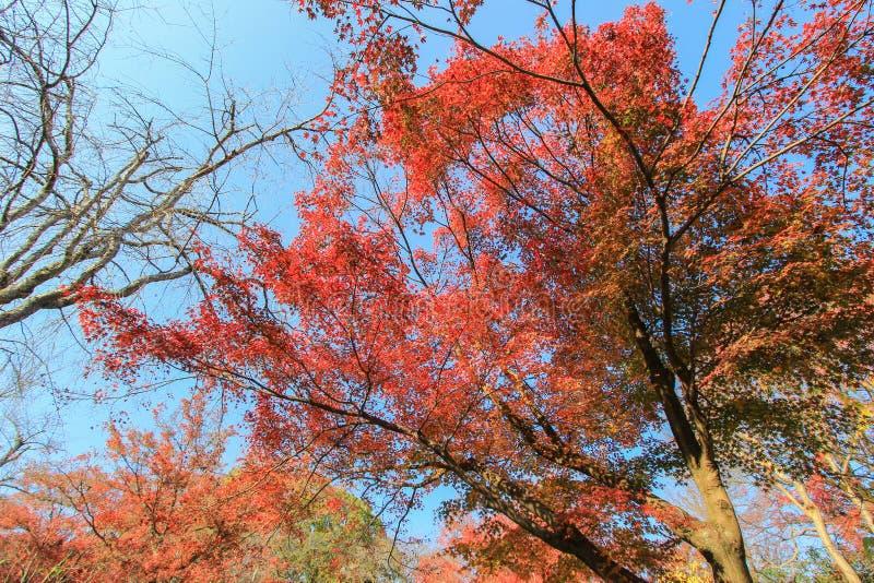 Mooie kleur van aard met duidelijke hemelachtergrond stock afbeeldingen