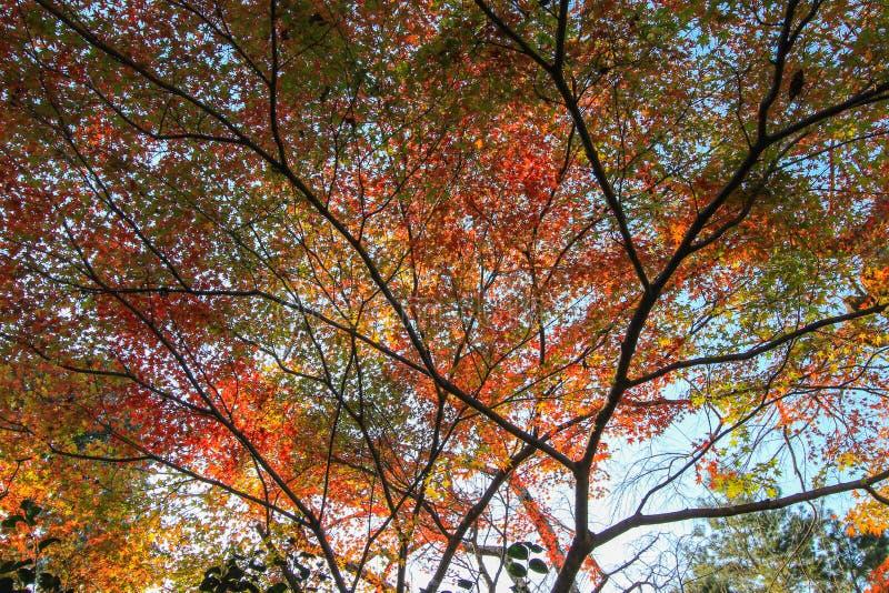 Mooie kleur van aard met duidelijke hemelachtergrond stock foto's