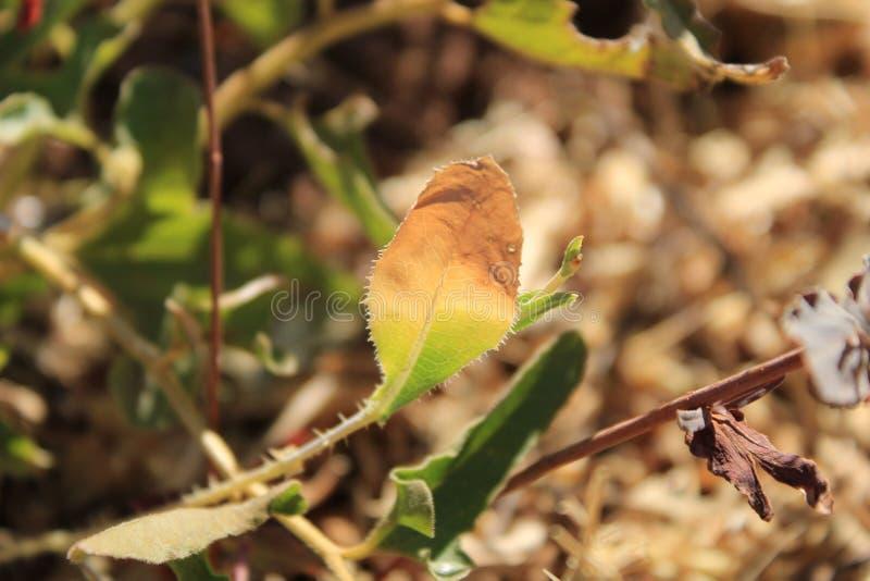 Mooie kleurenverandering van het blad, dat onder zon en schaduw is stock afbeelding