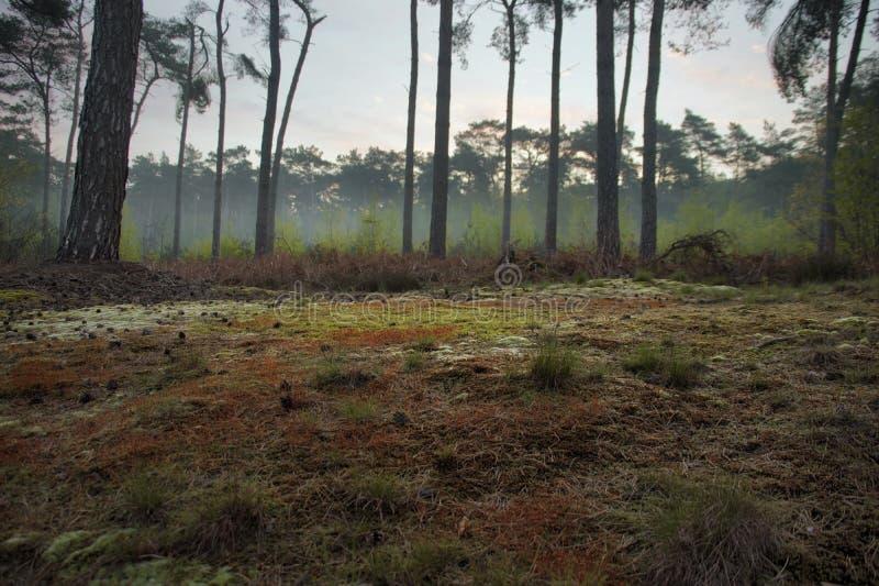 Mooie kleuring op bosvloer bij vroege ochtendgang stock foto