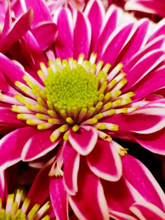 Mooie, kleurrijke bloeslag Saint Valentine 's dag gift Langere achtergrond royalty-vrije stock afbeelding