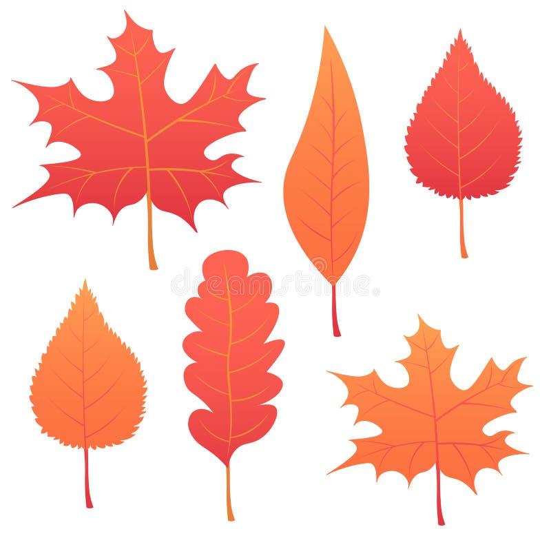 Mooie kleurrijke de herfstbladeren van de inzameling die op witte achtergrond worden geïsoleerds Illustratie vector illustratie