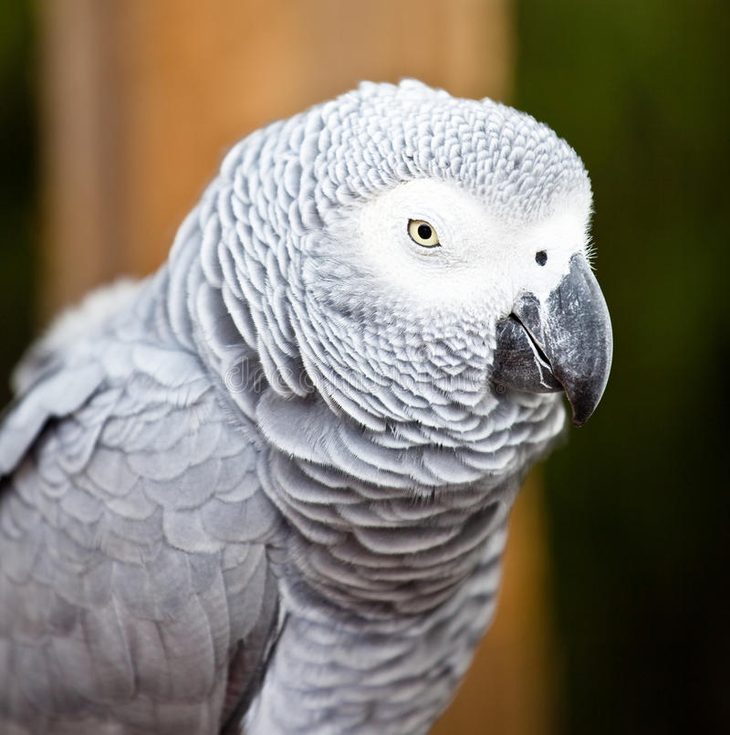 Mooie kleurrijke papegaai royalty-vrije stock foto